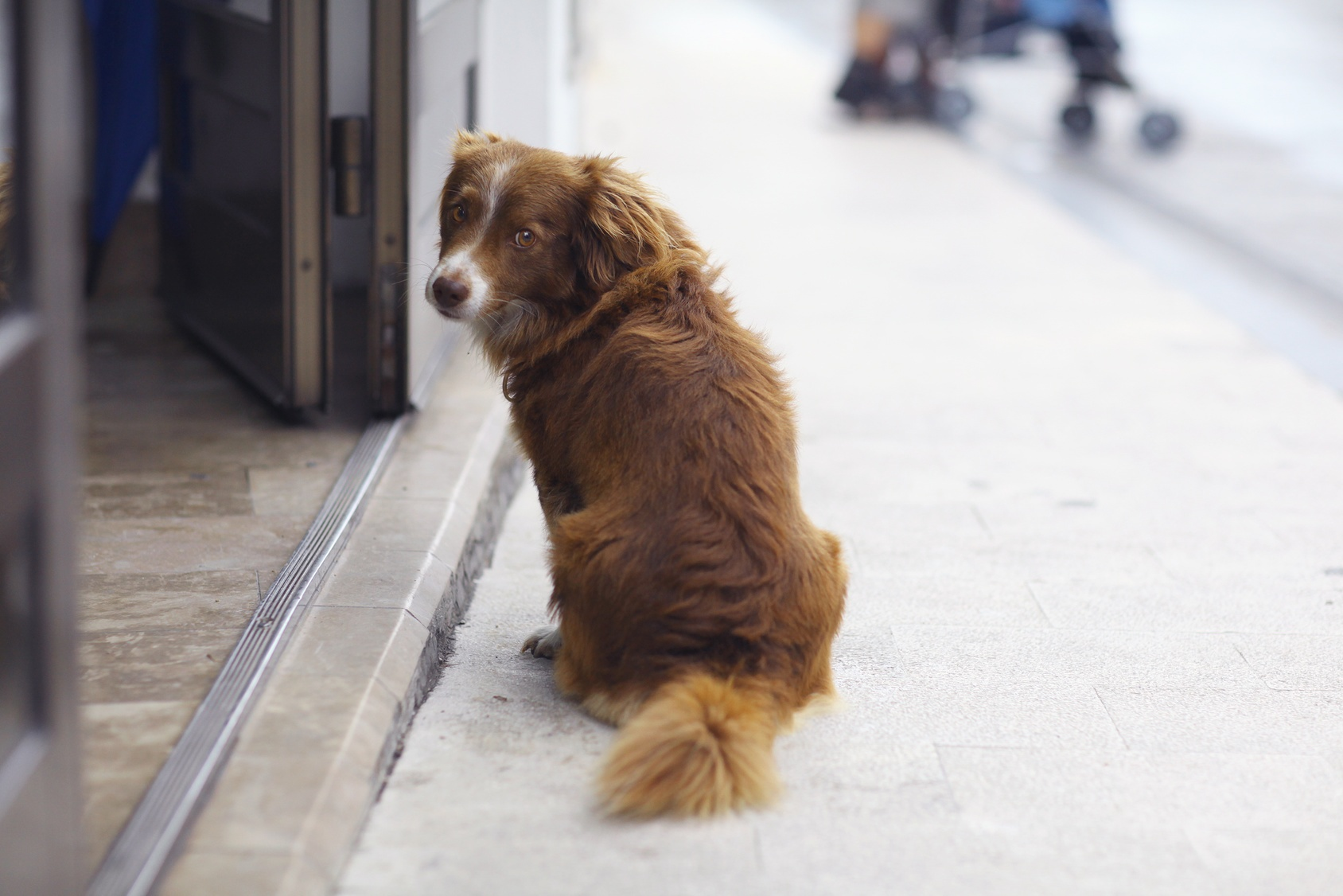 lost dog representing missing IT support employee